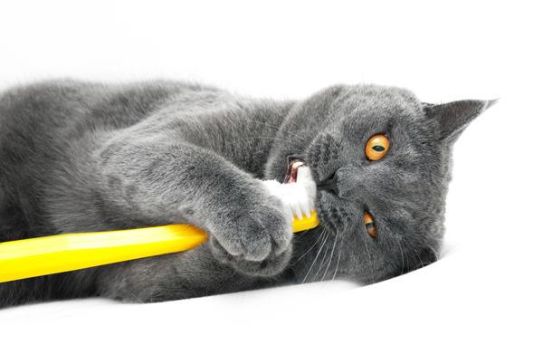 catteeth.jpg