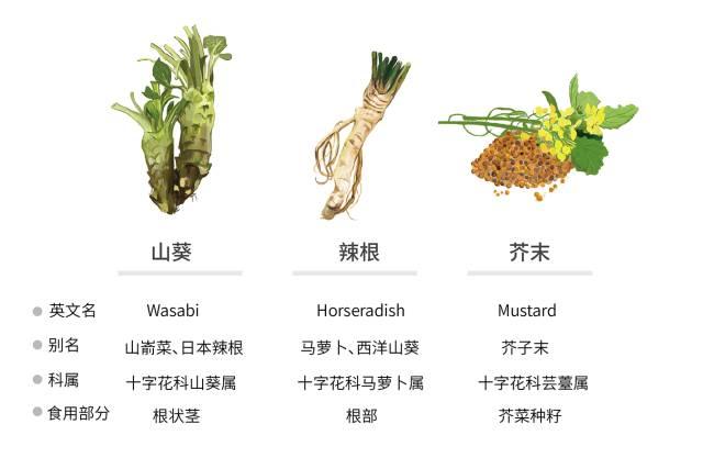 Wasabi,不是芥末是什么?